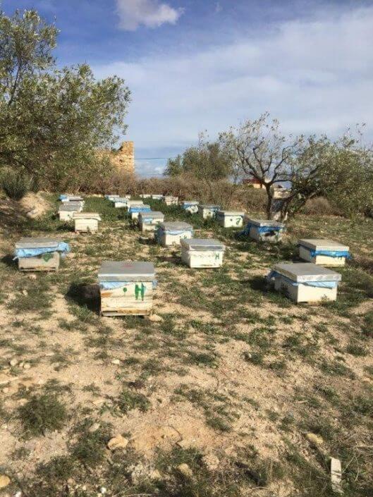 Bijen imker imkerpak project dar al ousra