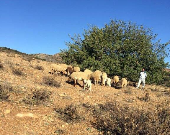 schapenhouder kebdani project daralousra